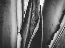 Slut upp av en tropisk palmträd Abstrakt begrepp gömma i handflatan textur för naturbakgrund Arkivbilder