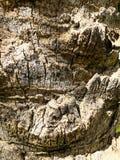 Slut upp av en tropisk palmträd Abstrakt begrepp gömma i handflatan textur för naturbakgrund Arkivfoton