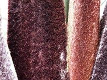 Slut upp av en tropisk palmträd Abstrakt begrepp gömma i handflatan textur för naturbakgrund Royaltyfria Foton