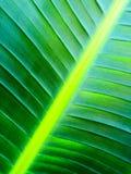 Slut upp av en tropisk palmträd Abstrakt begrepp gömma i handflatan textur för naturbakgrund Arkivbild