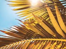 Slut upp av en tropisk palmträd Abstrakt begrepp gömma i handflatan textur för naturbakgrund Fotografering för Bildbyråer