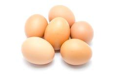 Slut upp av ett ägg  Arkivbilder