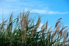 Slut upp av ett fält av bambu Arkivbild