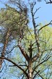 Slut upp av ett sörjaträd Arkivfoto