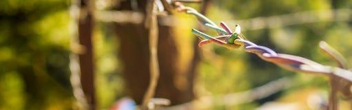 Slut upp av färgglad taggtråd Arkivbild