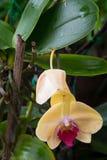 Slut upp av färgrika orkidéväxter Royaltyfria Bilder