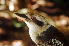 Slut upp av fågelprofilen Arkivbilder
