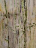Slut upp av förstenad wood textur, Wood inlämnat till stenen Arkivfoto