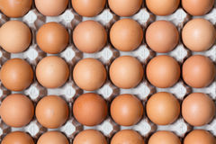 Slut upp av fega ägg i packe Arkivfoto