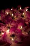 Slut upp av felika ljus för röd blomma i mörkret Arkivfoto