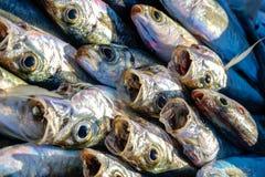 Slut upp av fisken på marknaden Arkivfoto