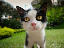 Slut upp av framsidan av lite den nyfikna inhemska katten i trädgårds- se för hus rakt till kameran royaltyfria foton