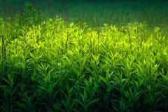 Slut upp av gräsbusksnåret Arkivbilder