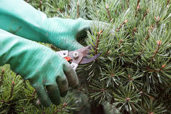 Slut upp av händer som klipper gräs med nagelsax Arkivfoton