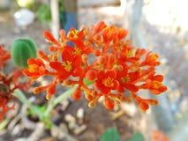 Slut upp av kaktuns i kruka Royaltyfri Foto