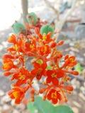 Slut upp av kaktuns i kruka Royaltyfria Bilder