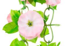 Slut upp av konstgjorda blommor Arkivbild