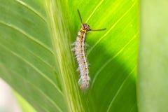 Slut upp av larven arkivbild