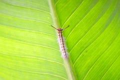 Slut upp av larven fotografering för bildbyråer