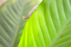 Slut upp av larven royaltyfri bild