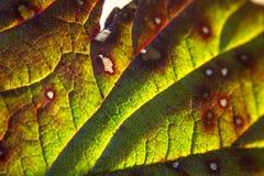 Slut upp av leafen Fotografering för Bildbyråer