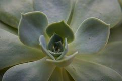 upp av leafen Royaltyfria Bilder