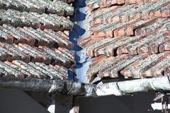 Slut upp av Lichen Covered Roof And Gutter royaltyfria bilder