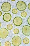 Slut upp av limefrukt på isdriva arkivbild