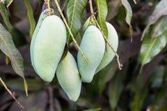 Slut upp av mango. arkivfoto