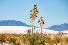 Slut upp av någon torkad blomma i de vita sanderna arkivbilder