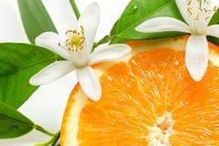 Slut upp av ny orange frukt med sidor och blomningen royaltyfri bild