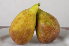 Slut upp av nya fikonträd mogna figs Arkivfoto