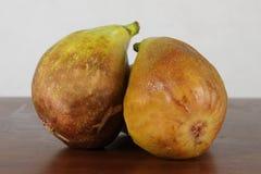 Slut upp av nya fikonträd mogna figs Royaltyfria Bilder