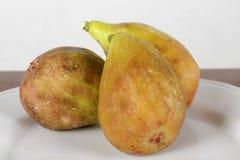 Slut upp av nya fikonträd mogna figs Royaltyfri Fotografi