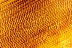 Slut upp av periolegrunden från en palmträd Arkivbild