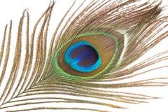 Slut upp av påfågelfjädern Arkivfoton