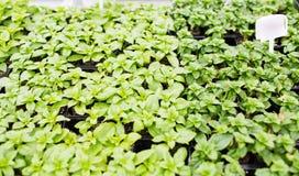 Slut upp av plantor i lantgårdväxthus Arkivbild