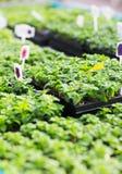 Slut upp av plantor i lantgårdväxthus Arkivfoto