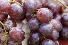 Slut upp av purpurfärgade druvor Arkivbilder