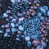 Slut upp av purpurfärgade frukter Royaltyfri Bild