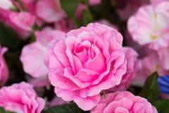 Slut upp av rosa konstgjorda blommor Royaltyfri Fotografi