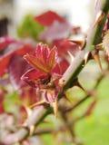 Slut upp av rosa taggar Royaltyfria Foton