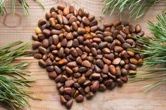Slut upp av sörjamuttrarna Pinuskoraiensis arkivfoton