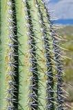 Slut upp av Saguarokaktuns Arkivfoton