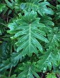 Slut upp av sidor på en växt Royaltyfri Foto