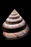 Slut upp av slitsen Shell Arkivbild
