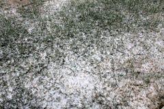 Slut upp av smältande snö på grönt gräs Arkivfoton