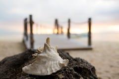 Slut upp av snäckskalet på den tropiska stranden Arkivbild