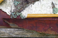 Slut upp av snirklar för trummabjörkskäll Arkivfoton