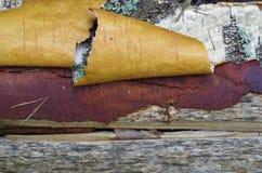 Slut upp av snirklar för trummabjörkskäll Royaltyfria Foton